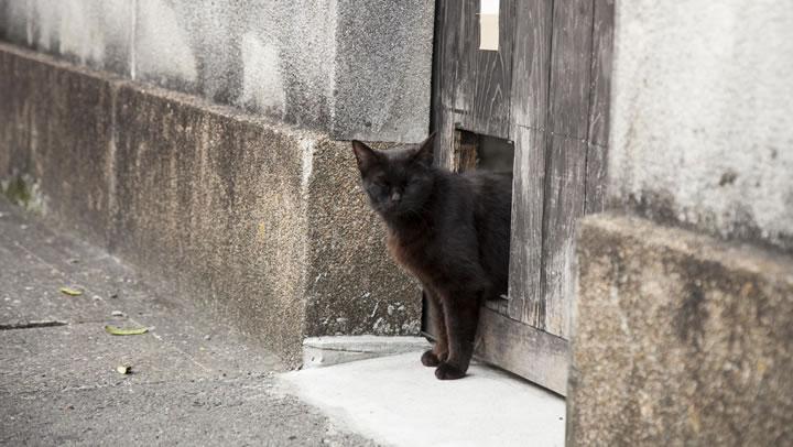 佐賀の黒猫
