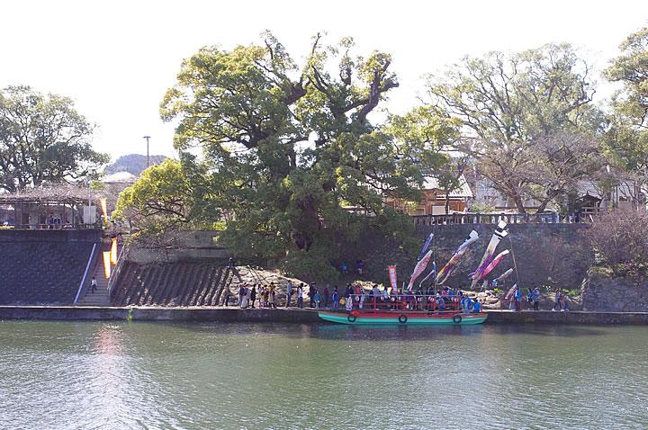 川上峡の鯉のぼり
