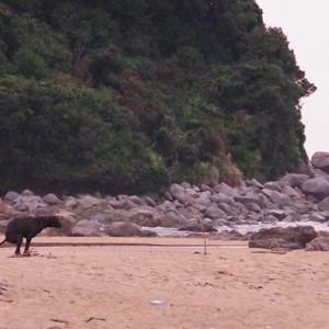 糸島大口海岸