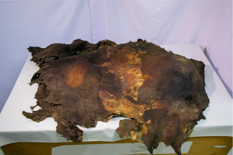 ケナガマンモスの皮膚(冷凍標本)